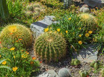 Готовим сад к зиме: работы в сентябре