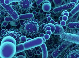 Как кишечная микрофлора контролирует здоровье