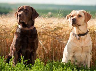 5 самых жизнерадостных пород собак