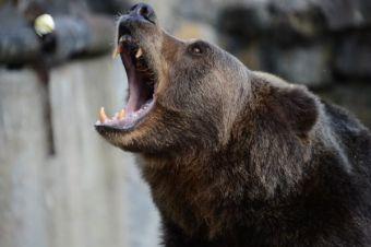 Встреча с медведем опасна для жизни!