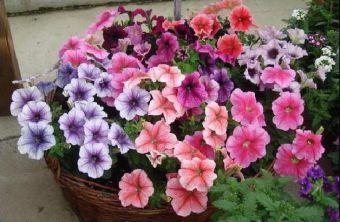 когда можно посадить рассаду цветов