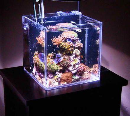 Какой мини-аквариум купить, как оборудовать и кем заселить