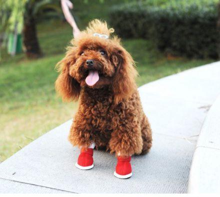 Зачем нужна обувь для собак