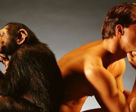 Какого рода существительные «шимпанзе» и «кенгуру» в русском языке