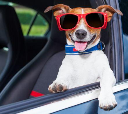 Как подготовиться поездке  на автомобиле, если собаку укачивает
