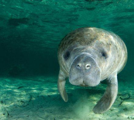 Какие животные относятся к морским млекопитающим