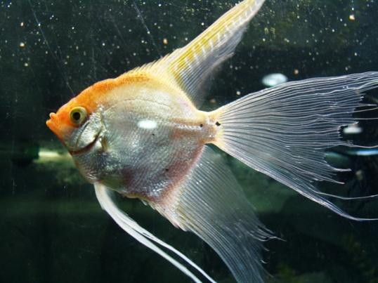 Как определить объем аквариума