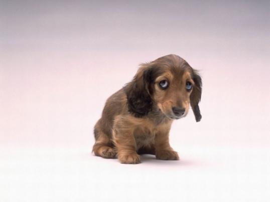 Как лечить понос у щенков