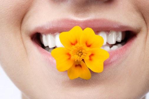 как удалить неприятный запах изо рта собаки