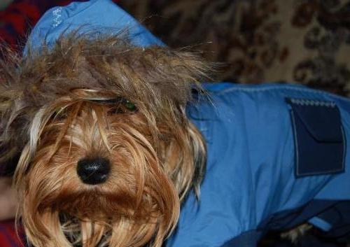 одежда для собаки