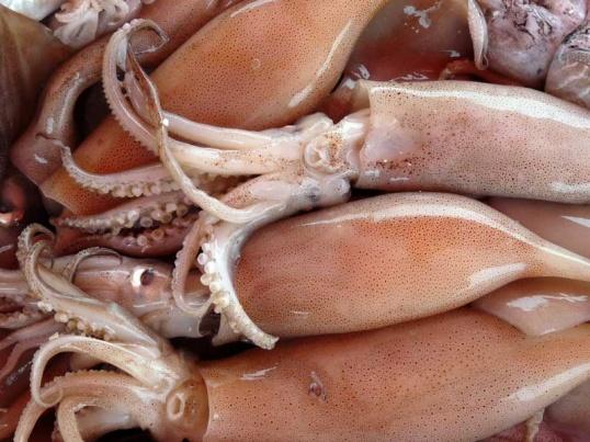 Цвет кальмаров зависит от их сорта