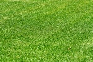 Если вы решили посадить во дворе газонную траву - не забывайте за ней ухаживать.