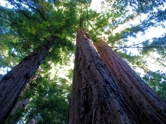 Каждый человек может внести свой посильный вклад в великое дело защиты природы