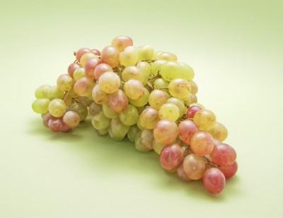 Как вырастить виноград из косточек