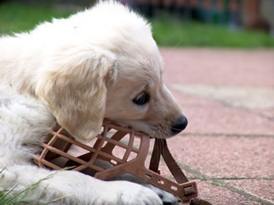Как сделать намордник для собаки своими руками