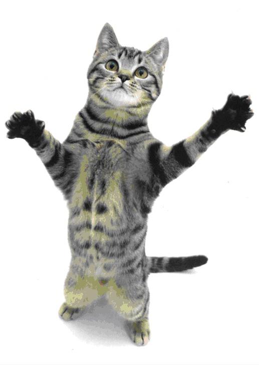 Царапающийся кот - гроза семьи!