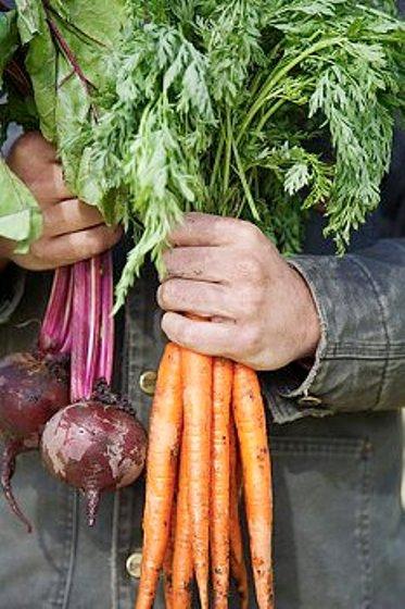 свекла и морковь - эффективное средство очищения и укрепления сосудов