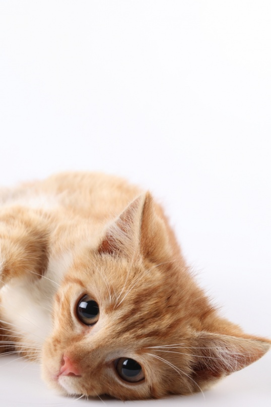 Как поставить клизму кошке