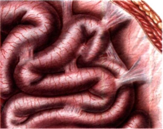 Диета и спайки кишечника: как питаться правильно?
