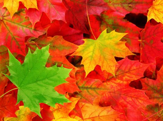 Как сделать аппликацию из листьев своими руками Мастер-класс