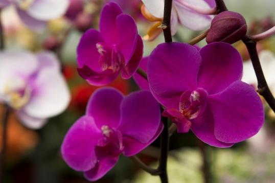 Как заставить орхидею зацвести Цветоводство