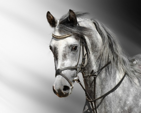 Вопрос нарисовать лошадь поэтапно Рисование