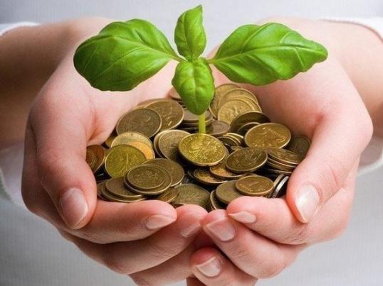 КОМНАТНЫЕ растения, привлекающие деньги Цветоводство