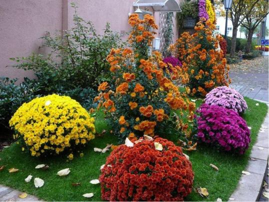 ЧТО делать цветоводу в сентябре Цветоводство