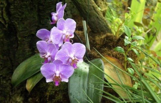 ПРАВИЛА успеха по уходу за орхидеями Цветоводство