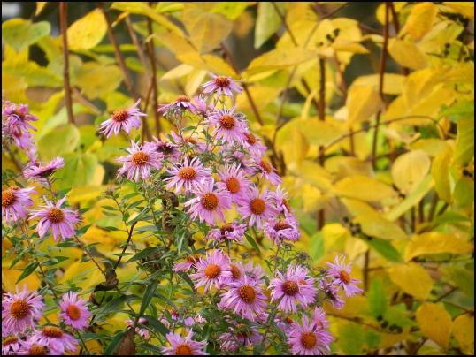 ЧТО делать цветоводу в октябре Цветоводство