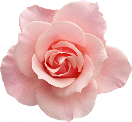 Как сделать розовое масло в домашних условиях Мастер-класс