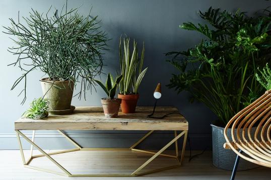 И неприхотливых комнатных растений