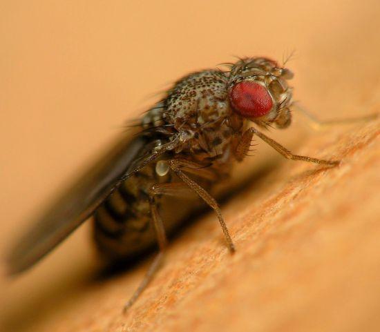 Как сделать чтобы мухи не садились 206