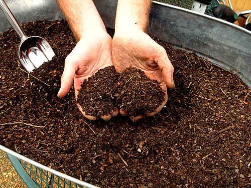 Можно ли компостировать листья ореха?