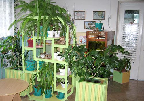 Растения уголка природы в доу картинки
