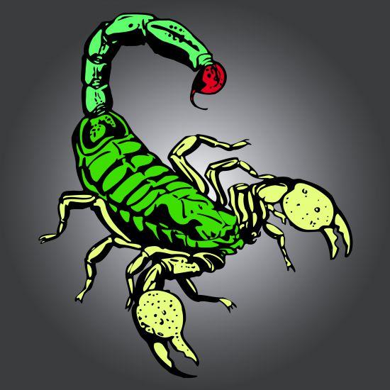 картинки скорпионов для татуировок