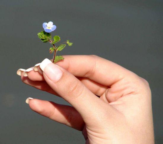 как вырастить ногти дома