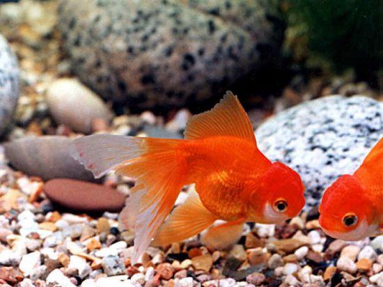 Аквариумные рыбки для начинающих видео
