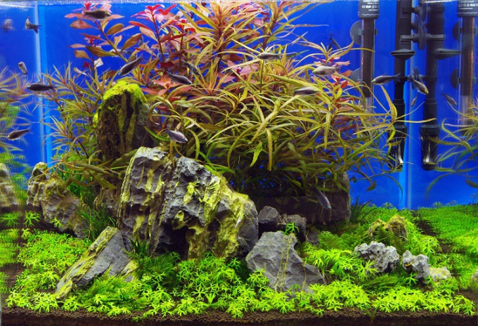 как оформить аквариум пошагово