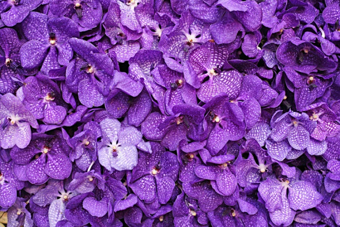 How to care for violets