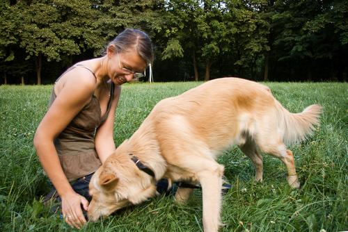 как обучить собаку команде голос