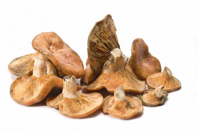Как верно собирать грибы