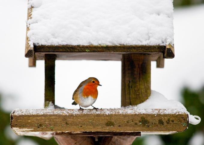 как сделать деревяную кормушку для птиц
