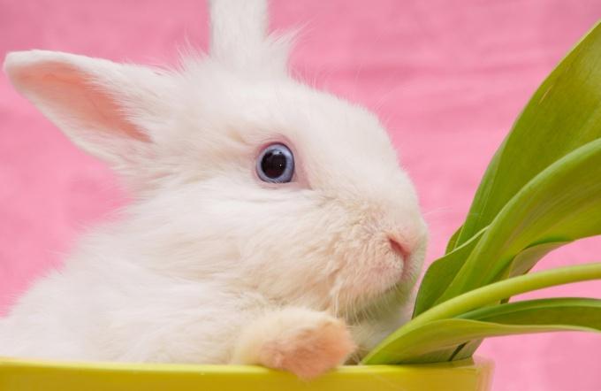 как ухаживать за настоящими кроликами
