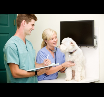 как делать внутри мышечные инъекции собаке