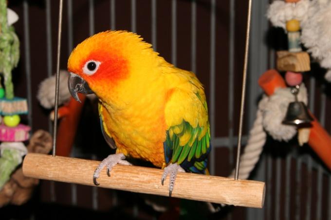 Как выбрать здорового попугая