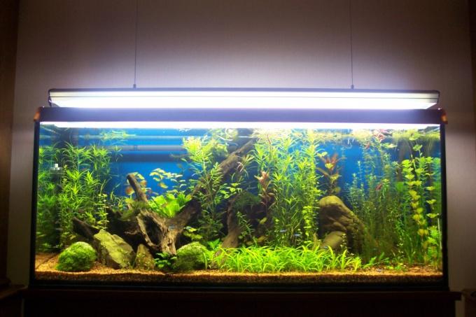 чем заполнить аквариум