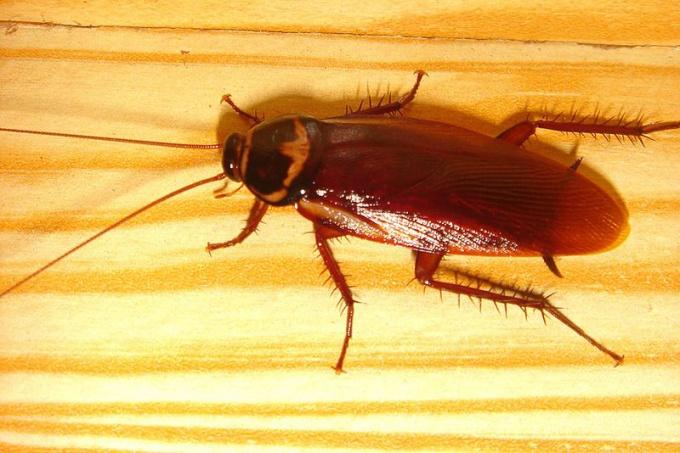 Как избавить от тараканов