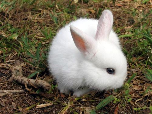 отучить кролика грызть провода