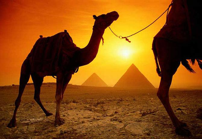 Как сделать верблюда